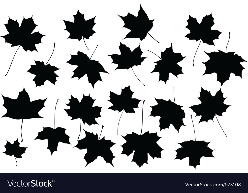 maple leaves royalty free vector image - vectorstock
