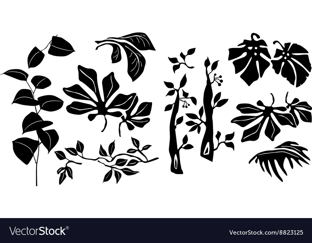 Tripical plants vector image