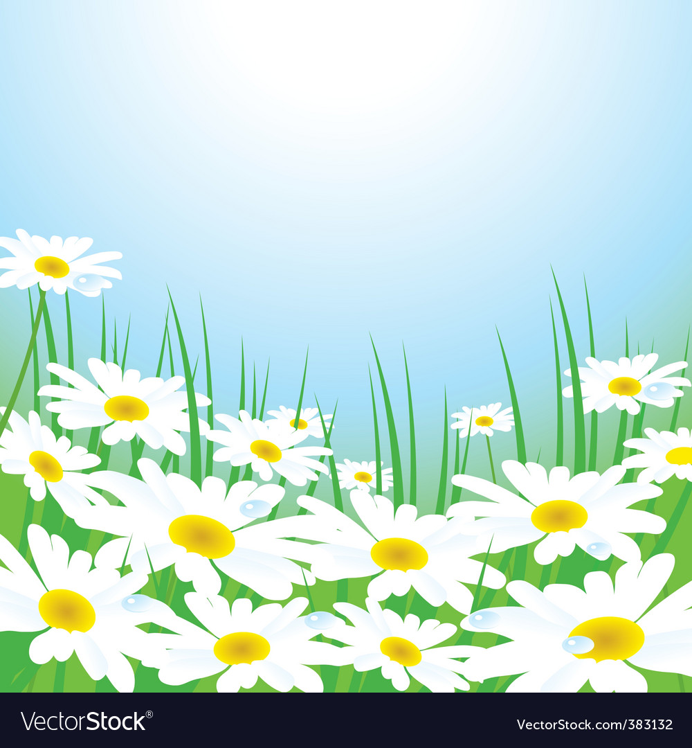 Chamomiles meadow vector image