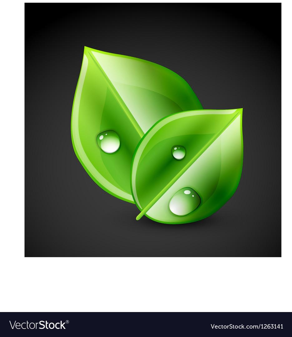 Green leaf ecology concept vector image