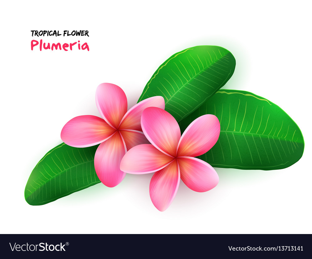 Isolated realistic tropical vector image