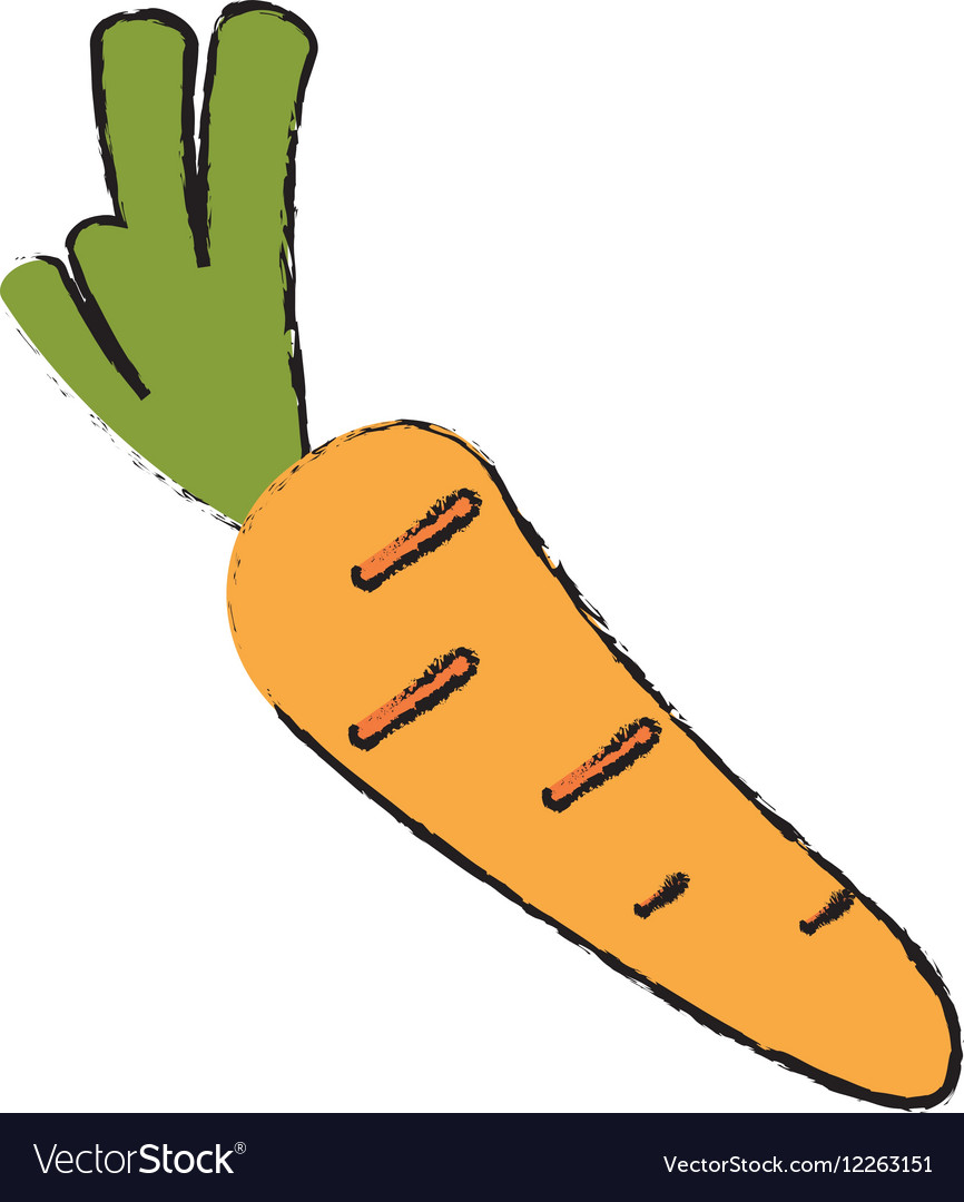 Drawing harvest carrot vegetable icon vector image