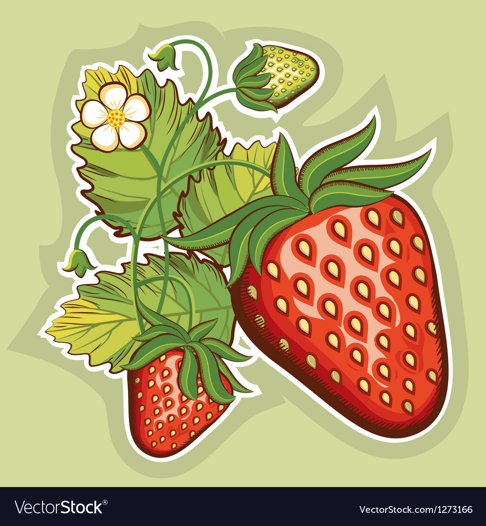 Red strawberries vector image