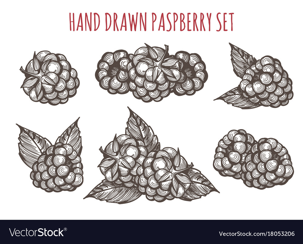 Sketch style raspberry icons set vector image