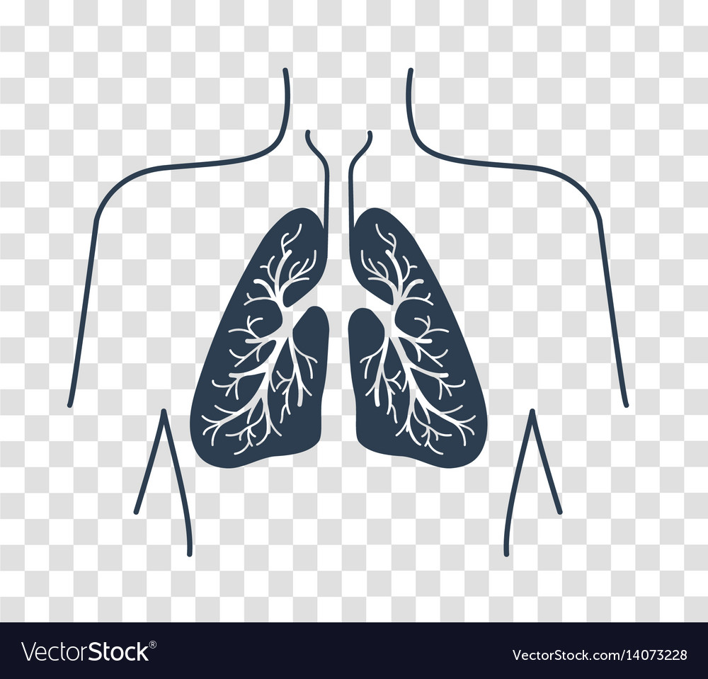 Silhouette icon of the human lungs vector image