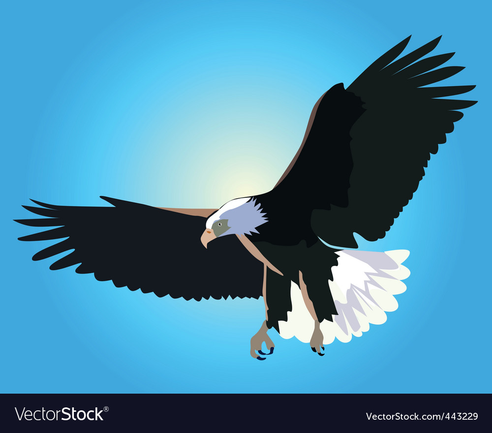 Eagle flying vector image