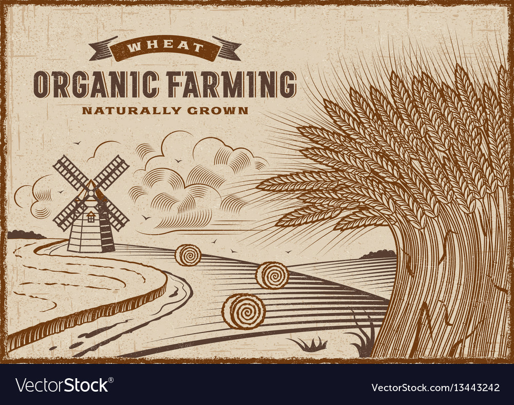Wheat organic farming landscape vector image