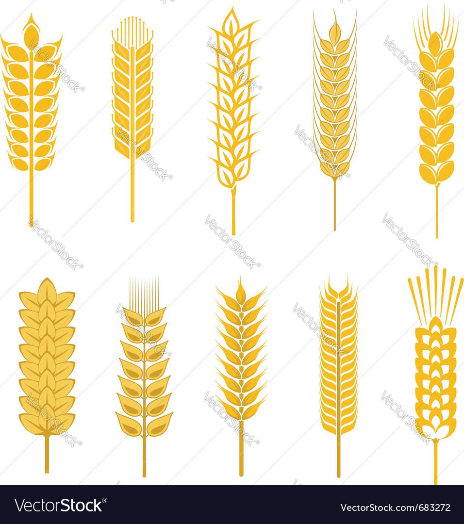 Cereal symbols vector image