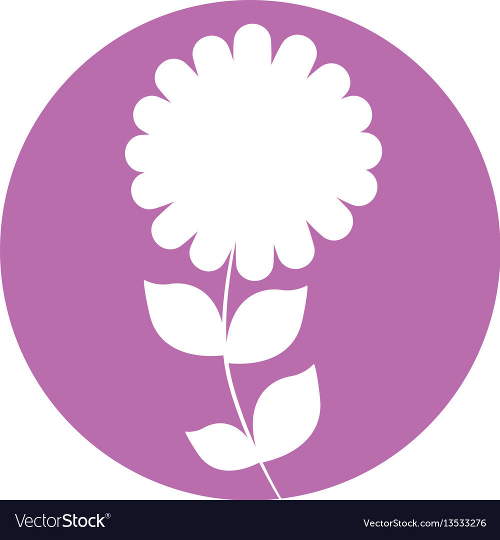 Camomile flower natural icon vector image