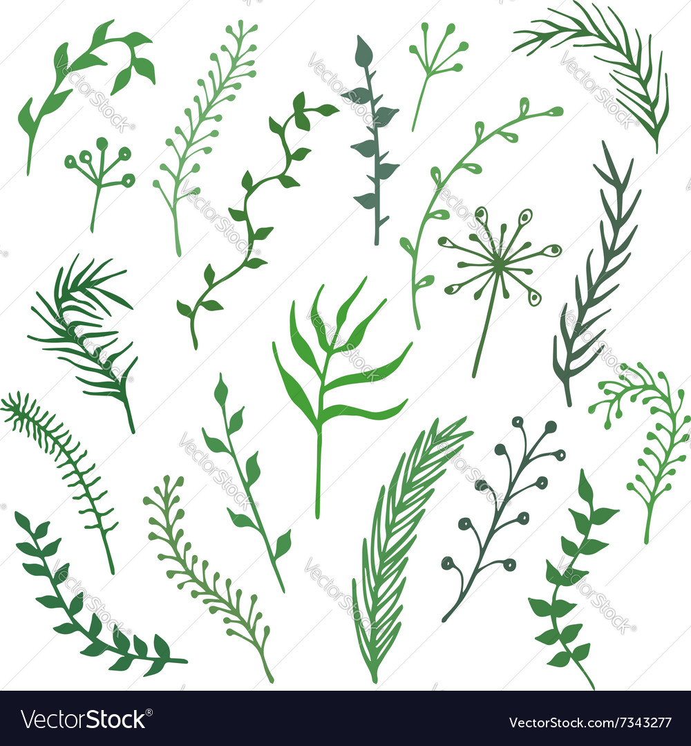 Set of hand-drawn branches plants and leaves vector image