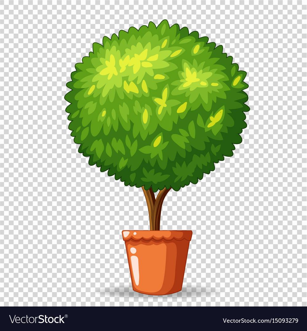 Bonsai in clay pot vector image