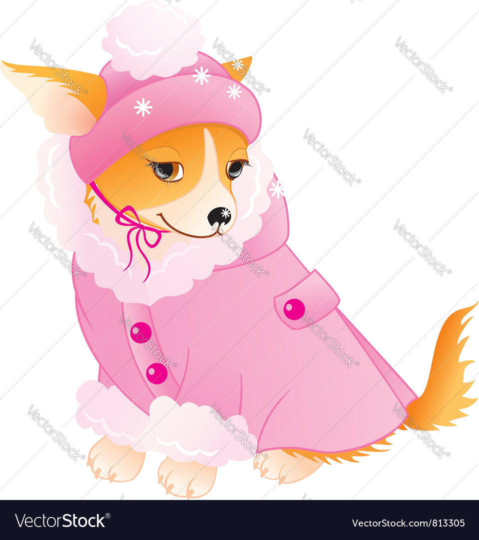 Glamour Chihuahua Vector Image