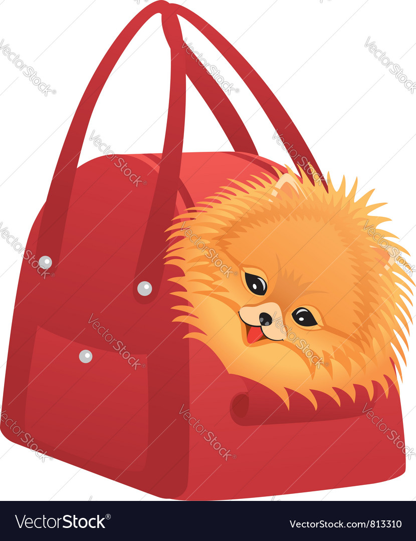 Happy Pomeranian spitz vector image