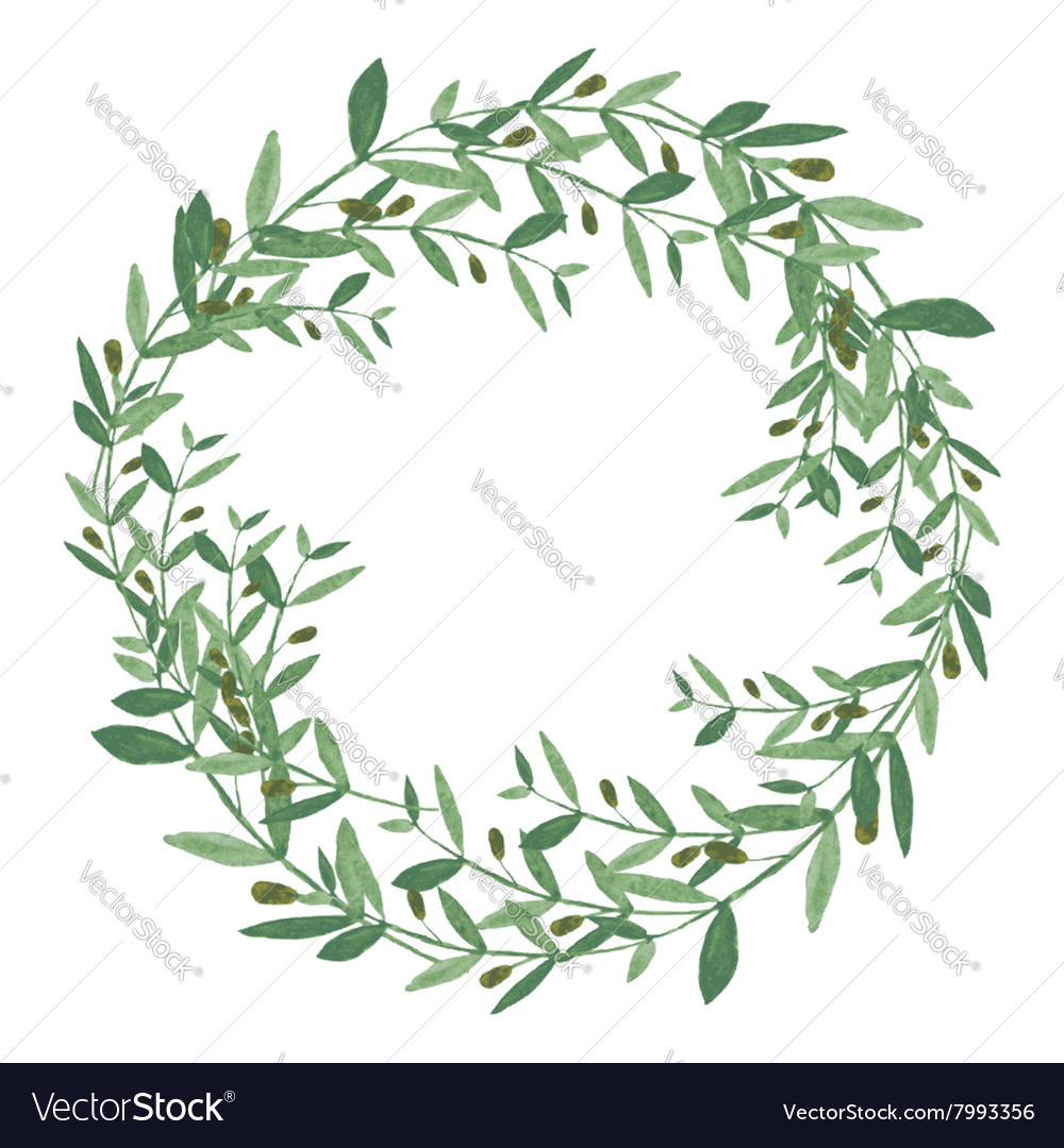 Watercolor olive wreath Isolated on white vector image