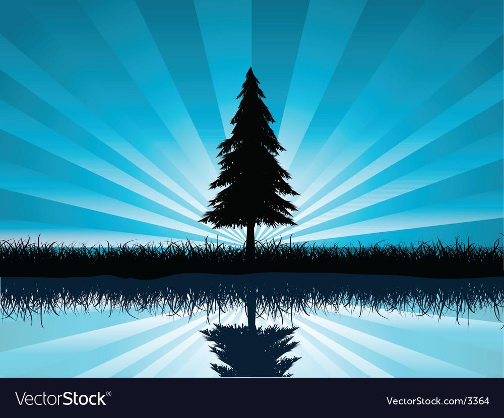 Solitary fir tree vector image