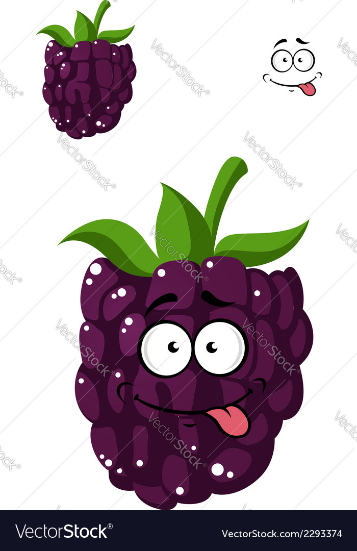 Delicious ripe blackberry vector image