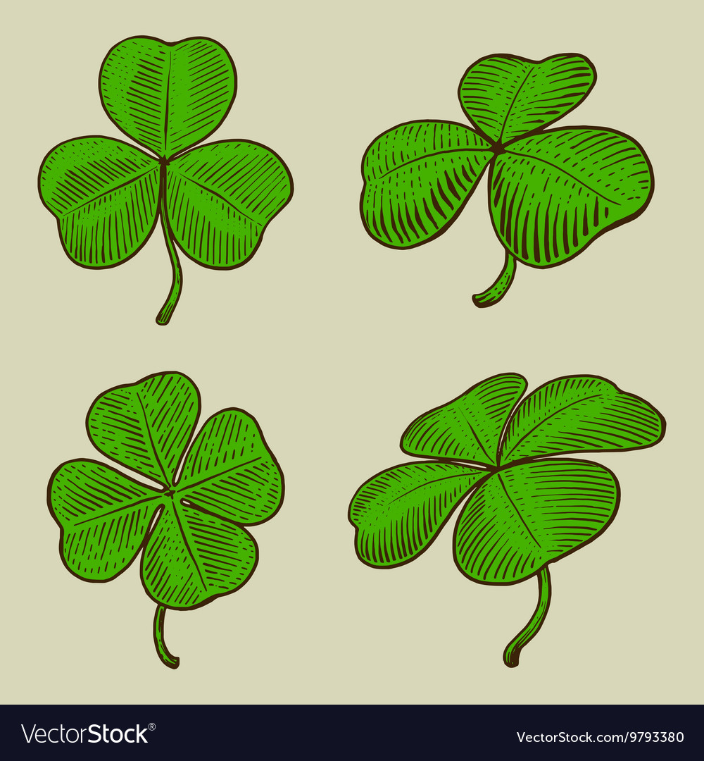 Clover leaf engraving style vector image