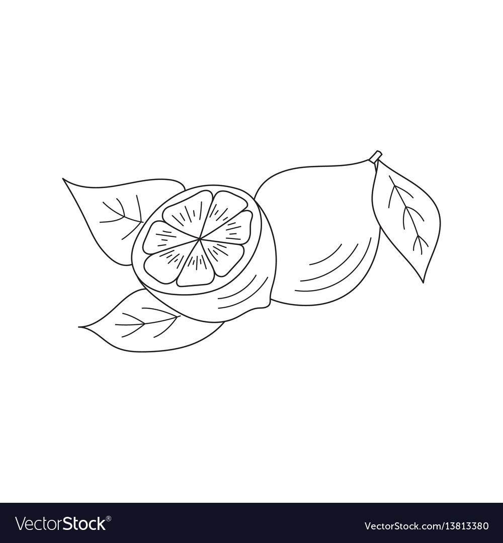 Lemon icon sketch vector image