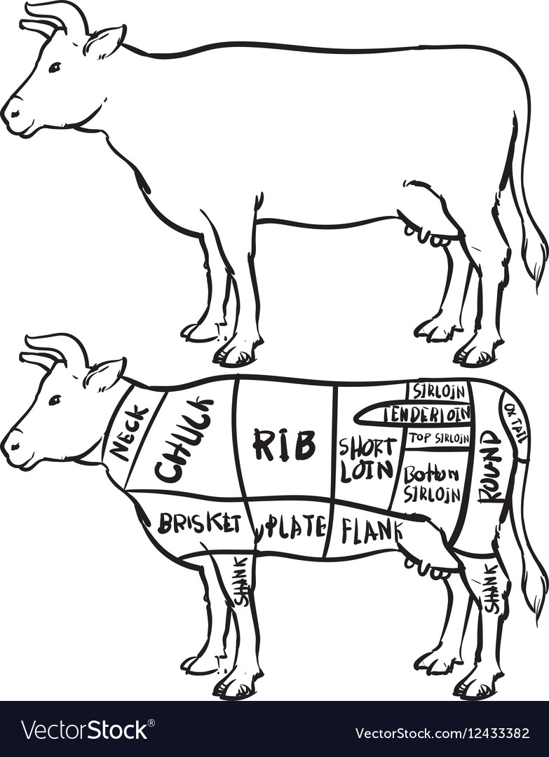 Cow cuts diagram and butchery set royalty free vector image cow cuts diagram and butchery set vector image ccuart Choice Image