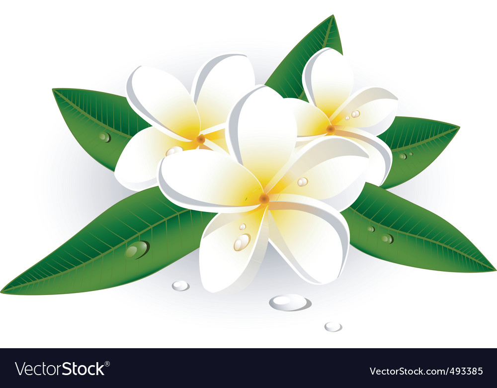 White flowers vector image