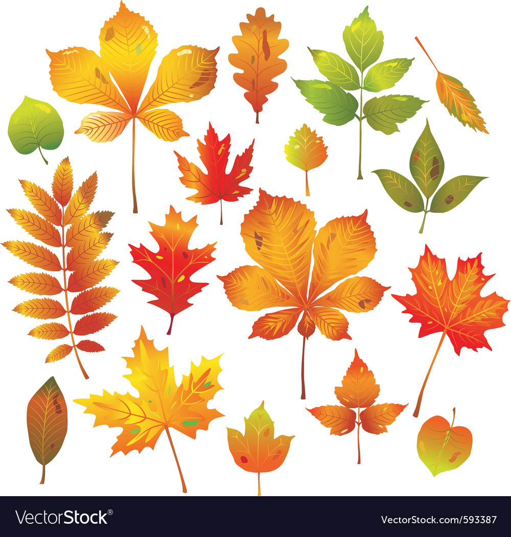 Colorful autumn leaves collection vector image
