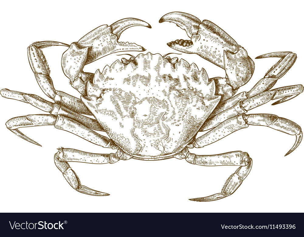 Engraving crab vector image