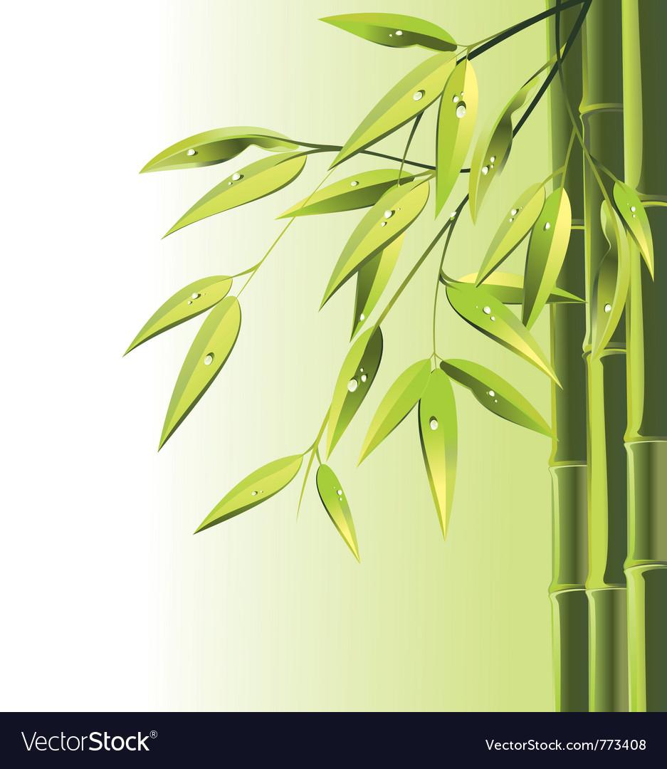 Zen bamboo vector image