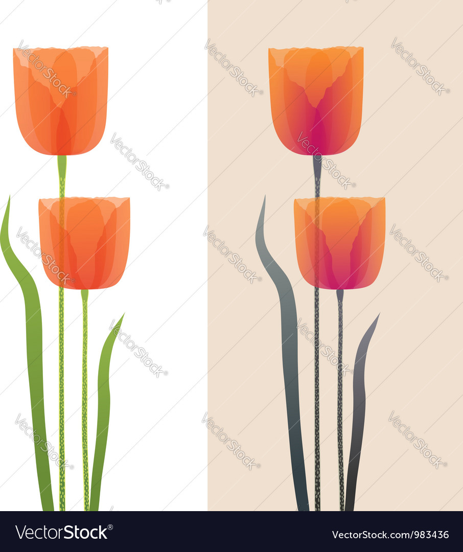 Poppies vector image