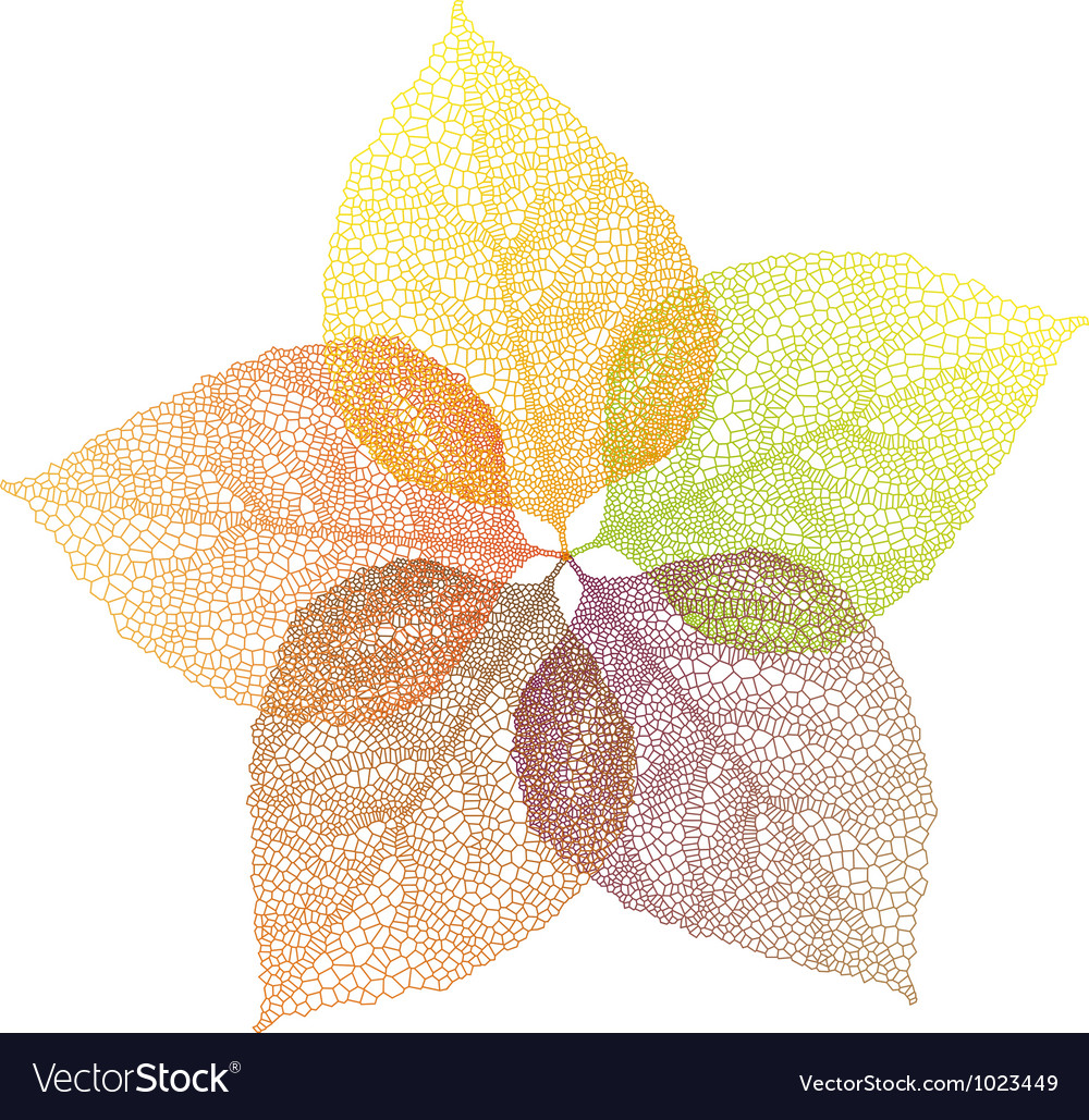 Autumn leaves flower Vector Image