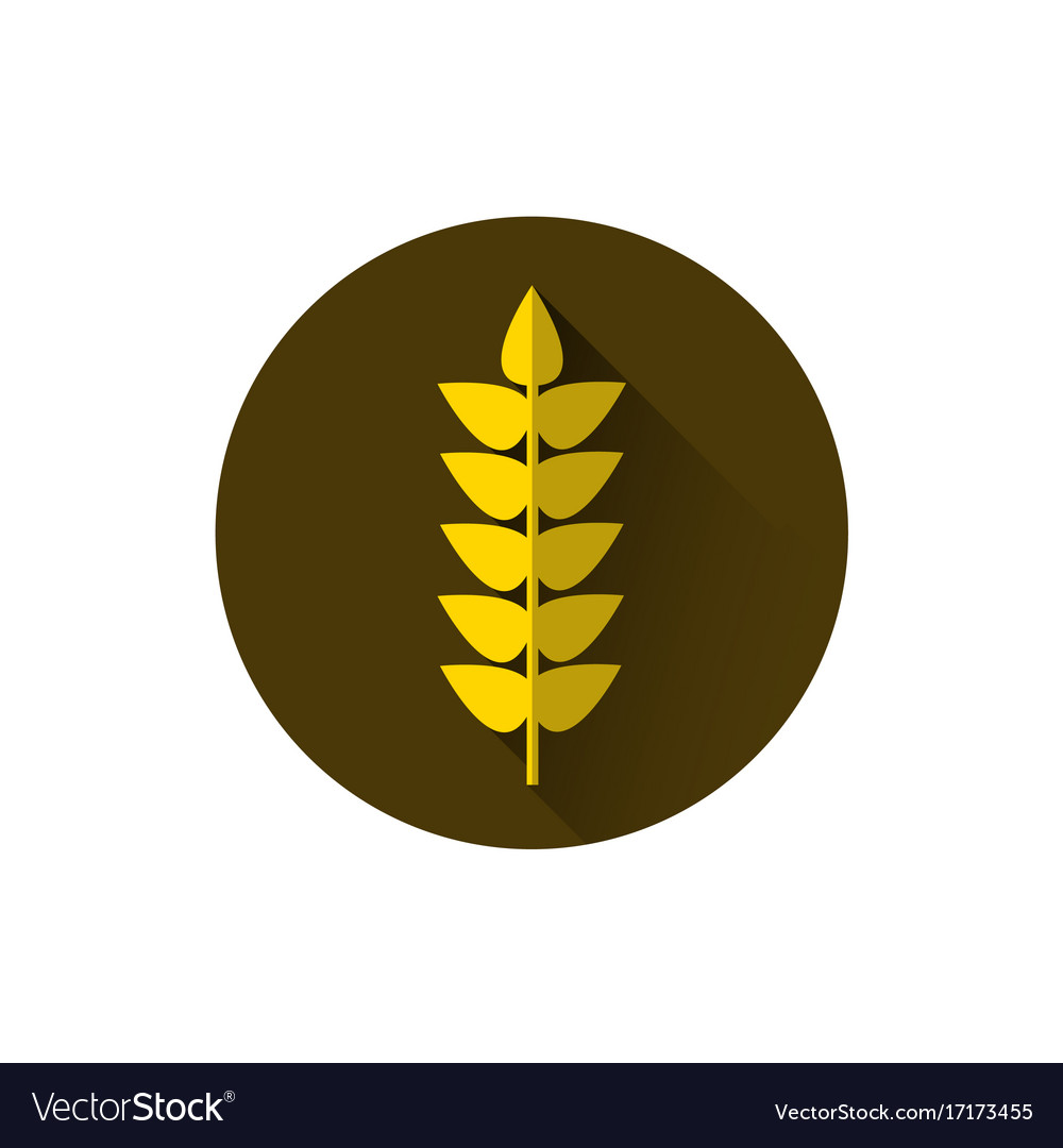 Wheat spike icon ripe crop grain vector image