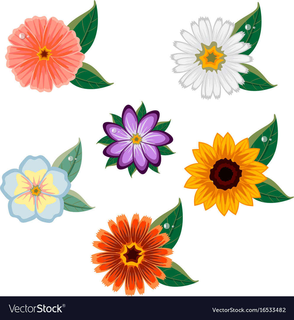 Colorful floral collection vector image