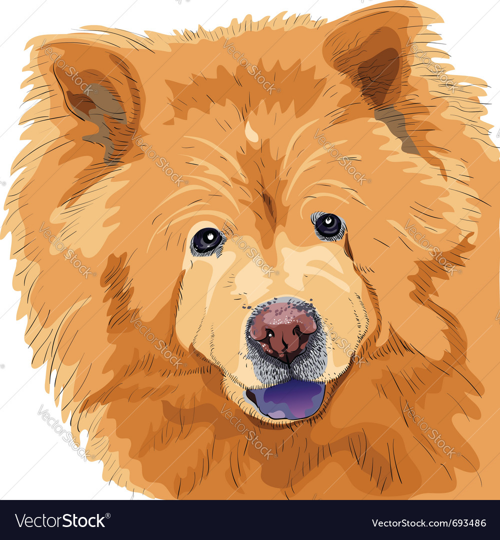 Chow-chow vector image
