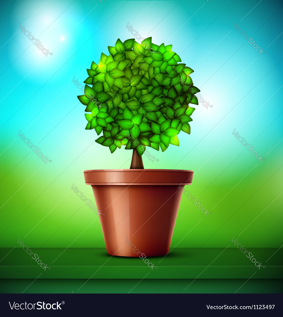 Tree in pot Vector Image