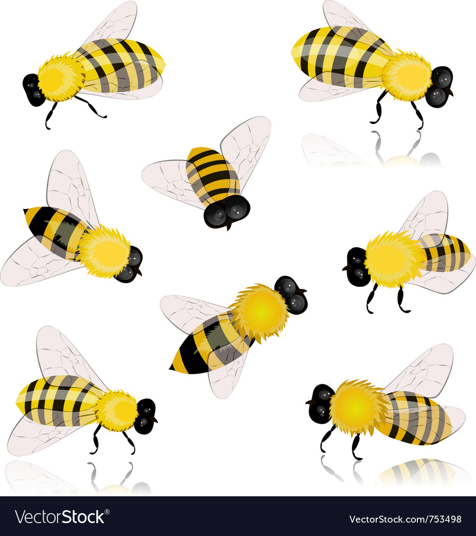 Insects bees vector image