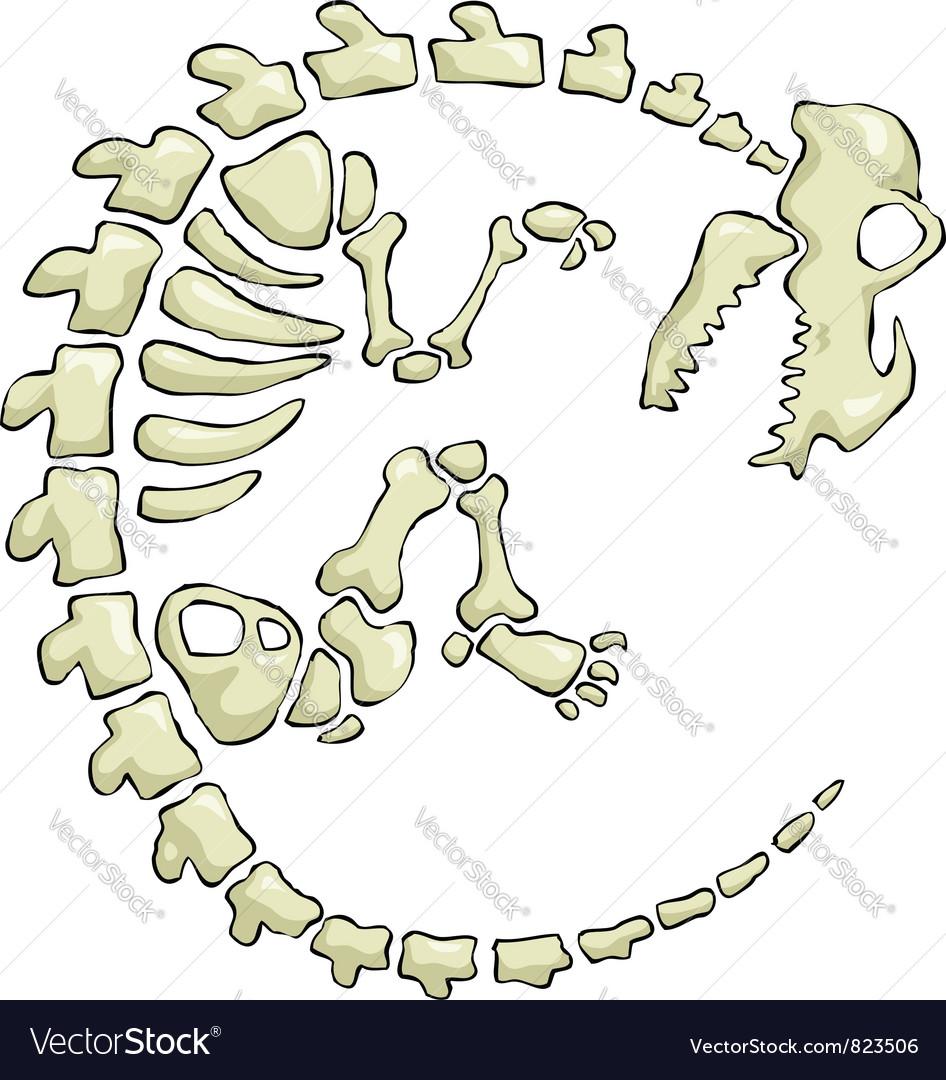 Dinosaur skeleton vector image