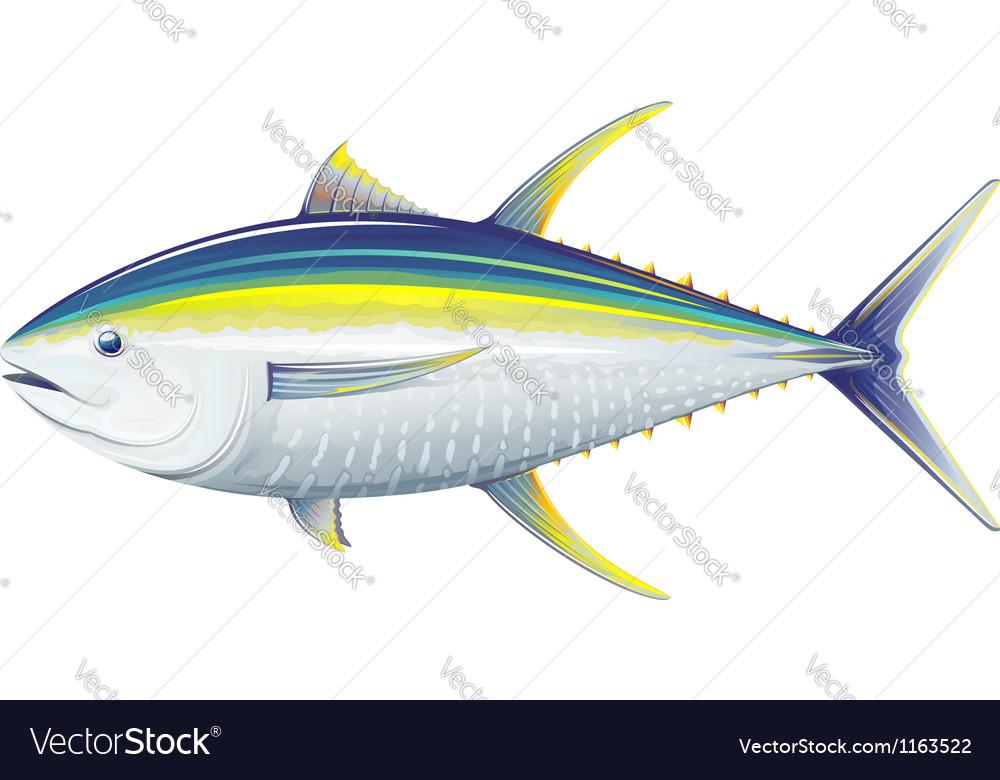 Yellowfin tuna vector image