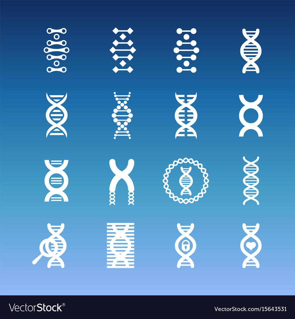 Dna spiral icons - medicinal and biology vector image