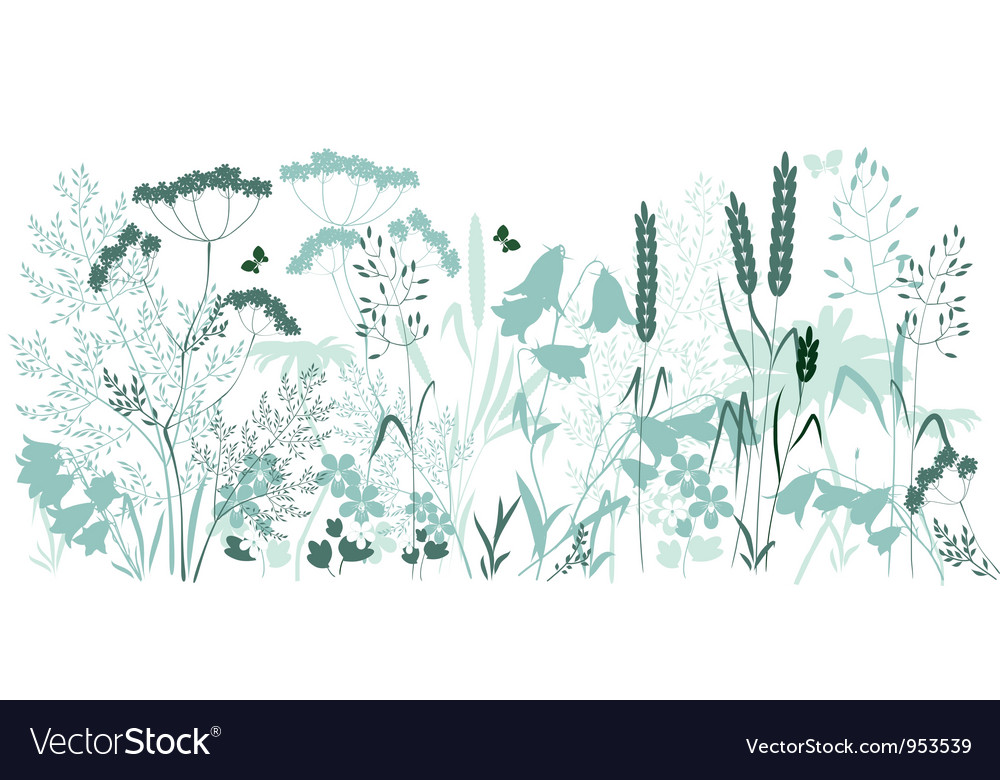 HERBAL vector image