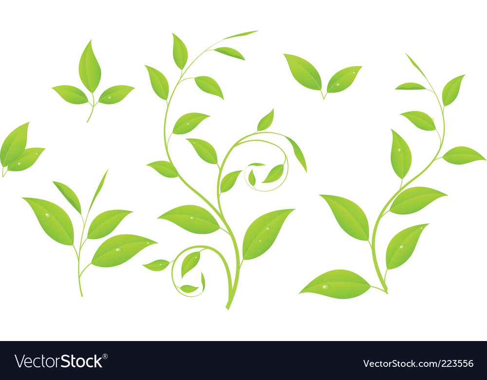 Green branches vector image