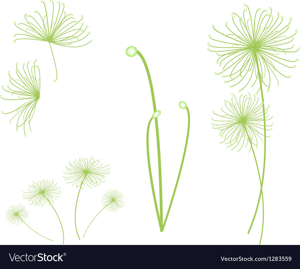 A Set of Cyperus Papyrus Plant on White Background vector image