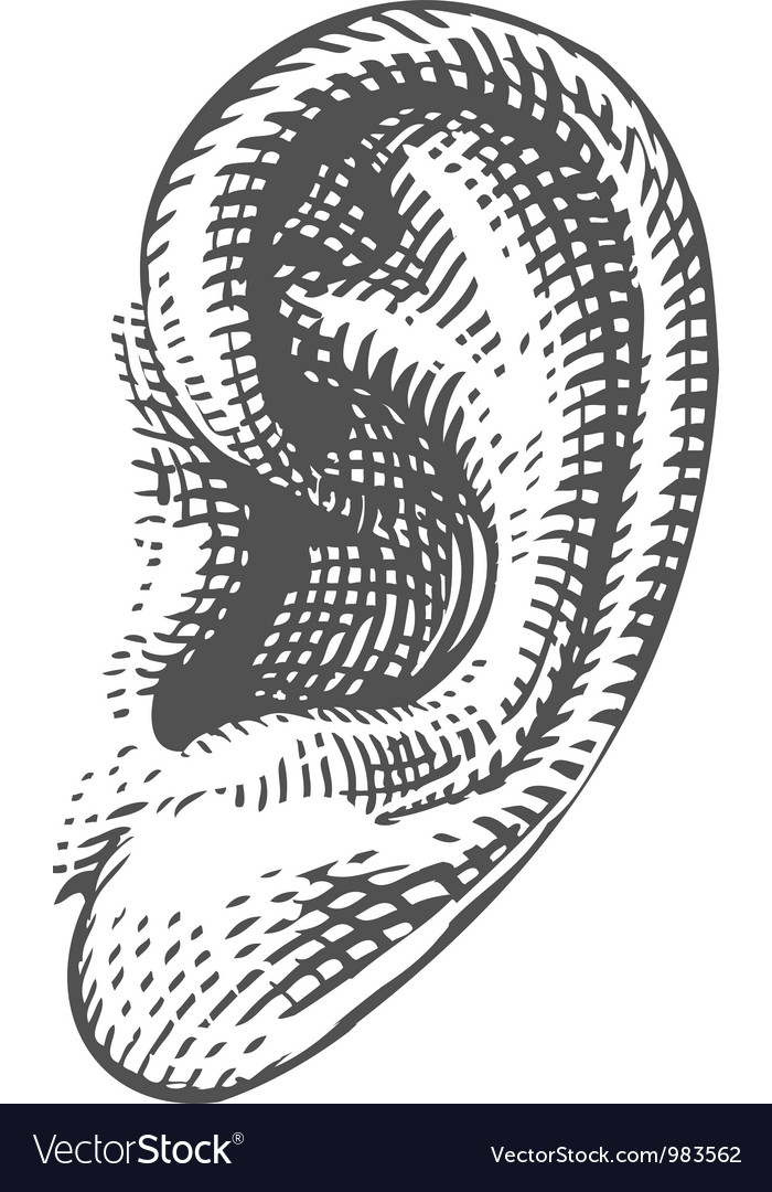 Human ear in engraved style vector image