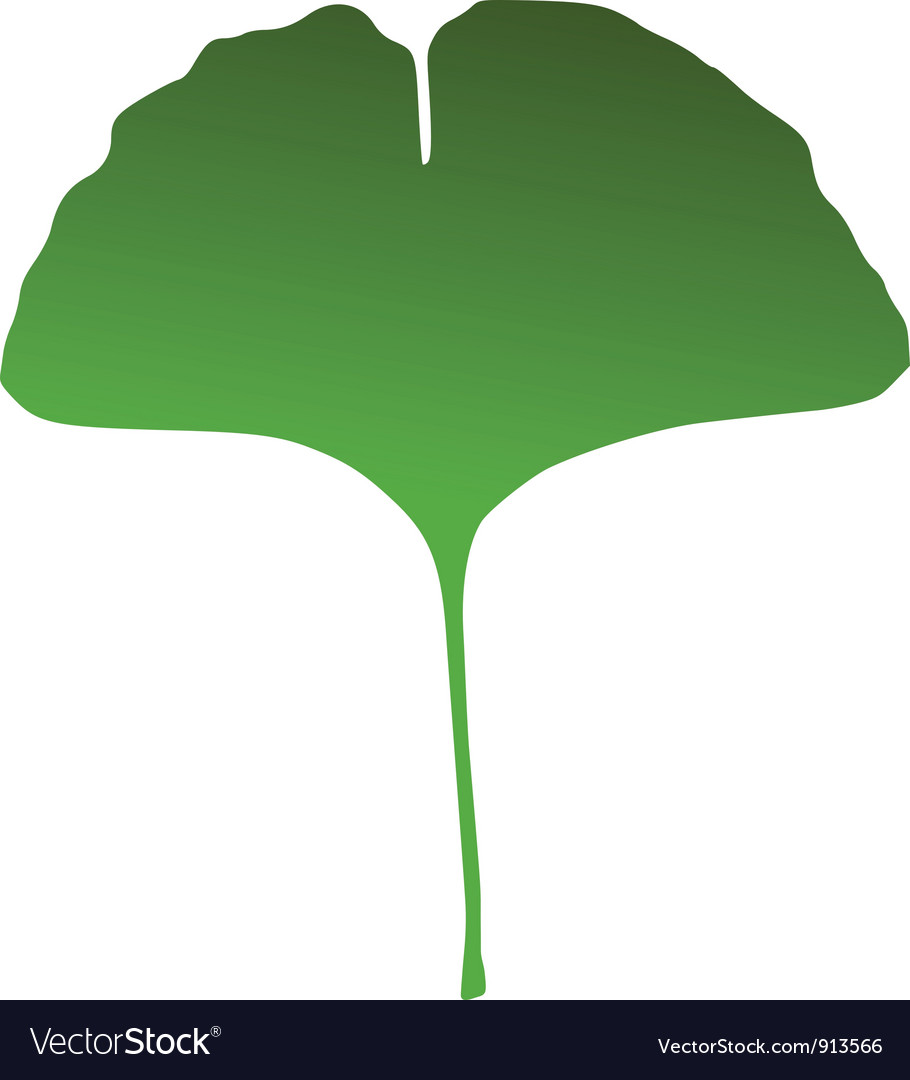 Ginkgo leaf vector image