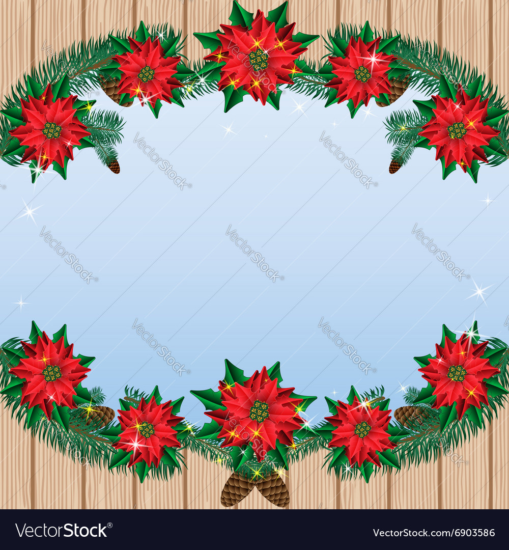 Christmas poinsettia flowers background with pine vector image