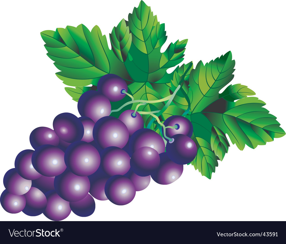Grapes background vector image