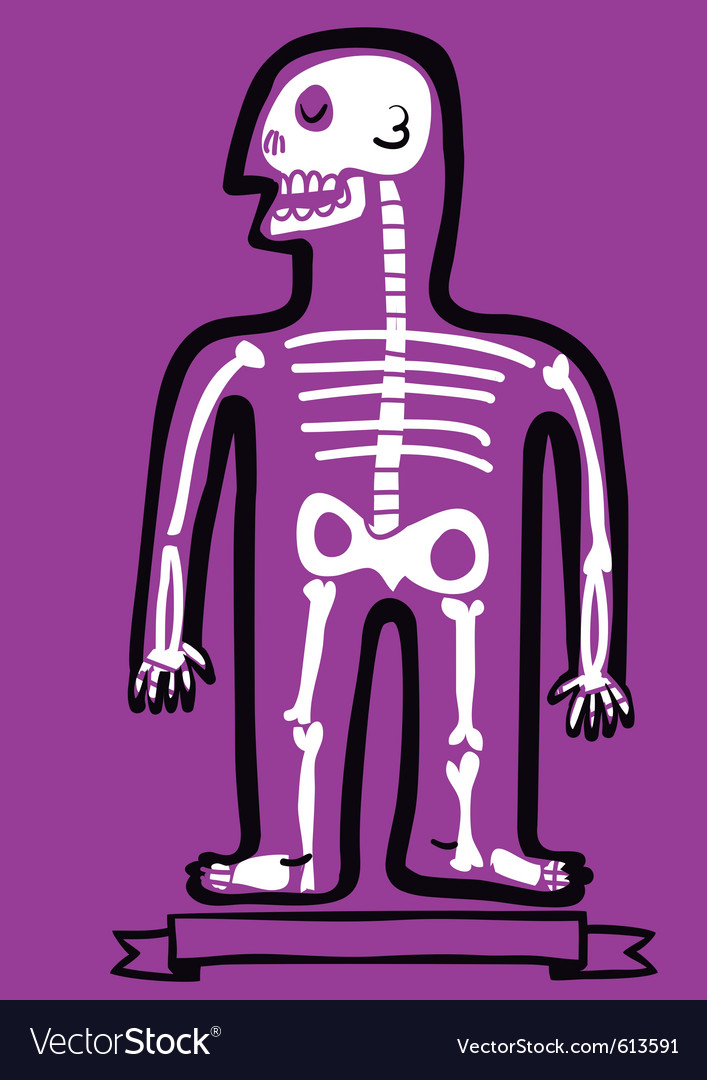 Human body bones vector image