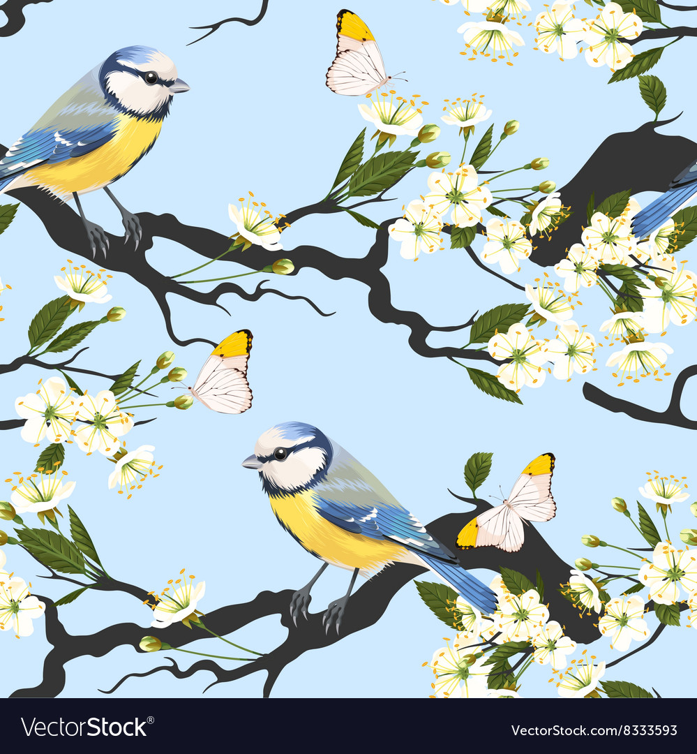 Tomtit on cherry branch seamless vector image