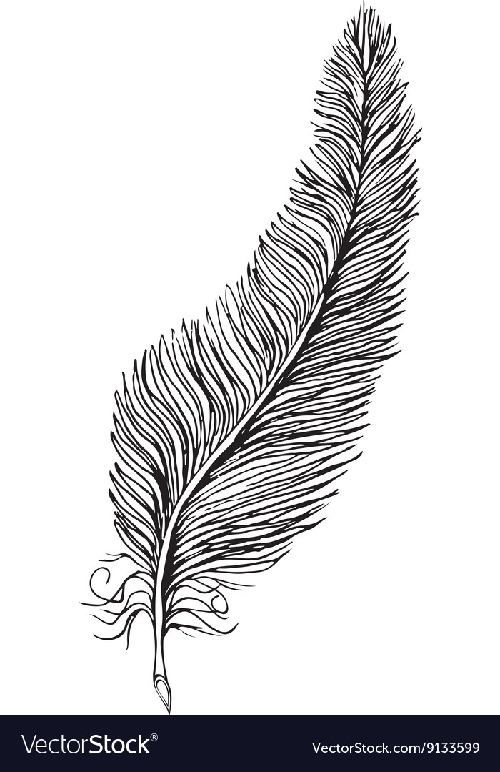 Line Art Feather : Line drawing feather royalty free vector image vectorstock