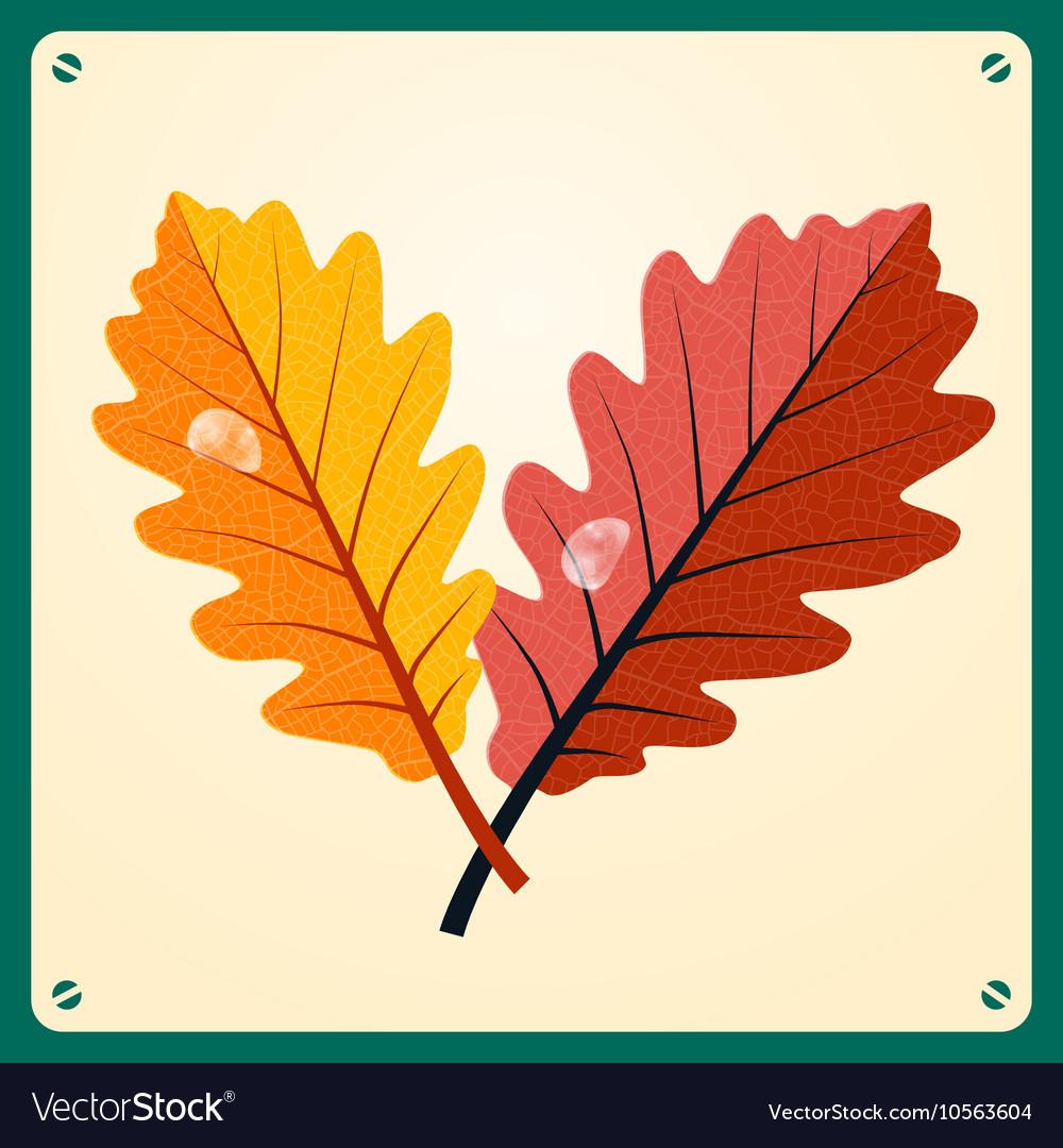 Oak Leaves - Oak Leaf with Rain Drop on Retr vector image