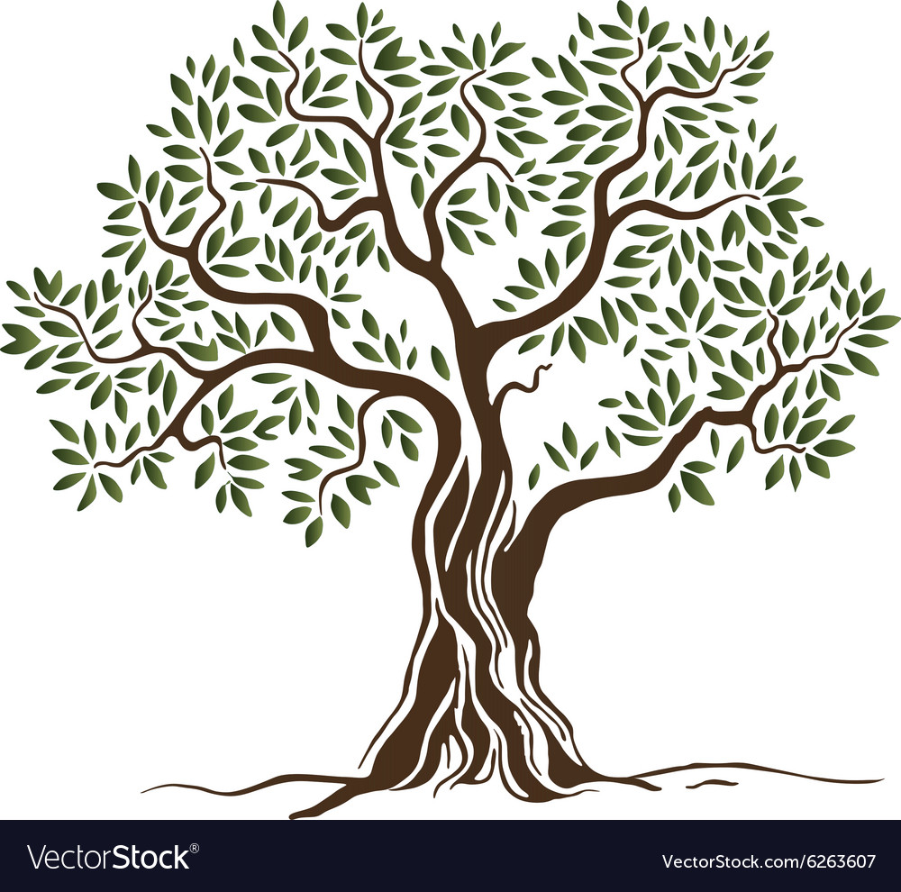 olive tree royalty free vector image vectorstock