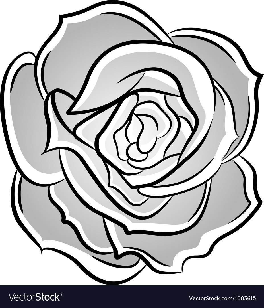 Rose decorative vector image